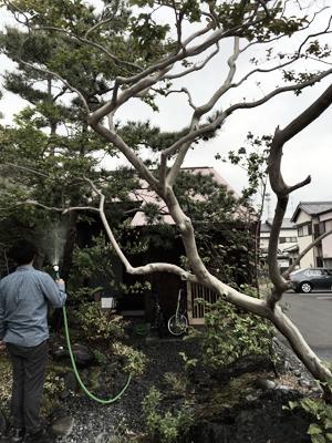 house F 庭 Snowdesignoffice スノーデザインオフィス 静岡 住宅設計 設計事務所