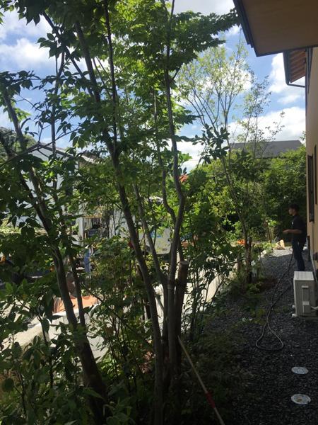 house M 続植栽 snowdesignoffice 住宅 店舗 建築設計事務所 島田 藤枝 静岡 愛知 三重